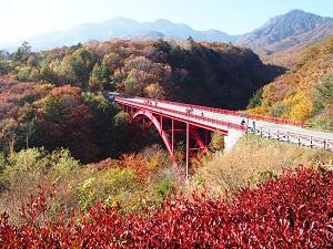 清里・八ヶ岳のおすすめ紅葉スポット・東沢大橋