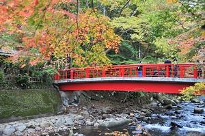 修善寺・桂橋の紅葉