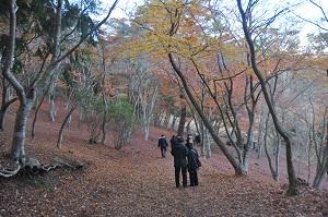 修善寺自然公園紅葉林